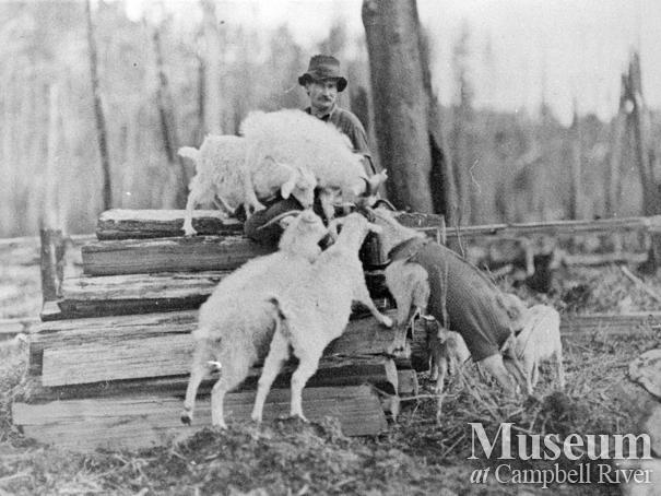 Art Stenfors and his goats at his ranch at Granite Bay, Quadra Island