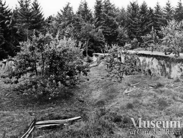 Marshall's orchard after 1946 eathquake,  Read Island