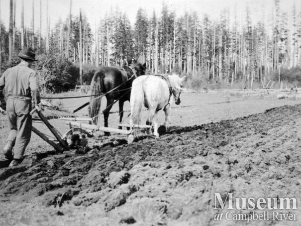 Plowing  the fields at the Yeatman family farm (Sunny Side) on Quadra Island