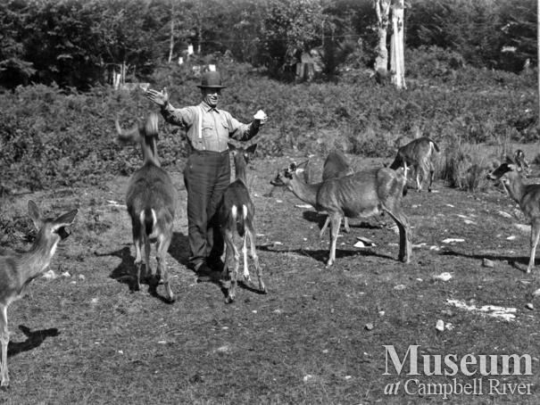 Tom Brazil and his deer at his home at Blind Bay, Hardy Island