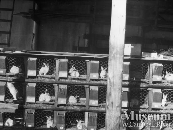 Schnarr's rabbit cages, Bute Inlet 1920's