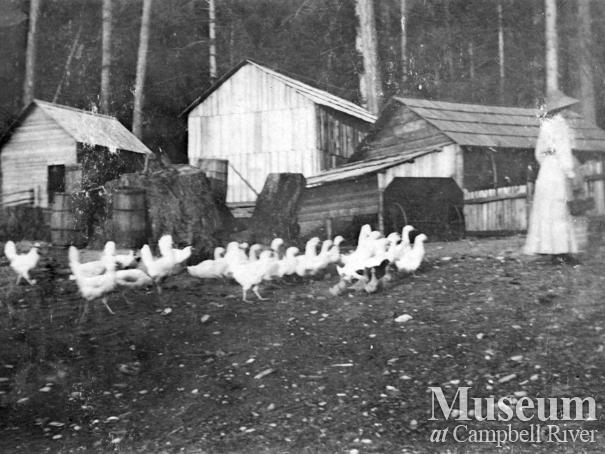 Chicken yard and outbuildings at Marlatt family homestead, Mary Island