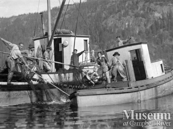 Quathiaski Canning Company boats and fishermen brailing salmon