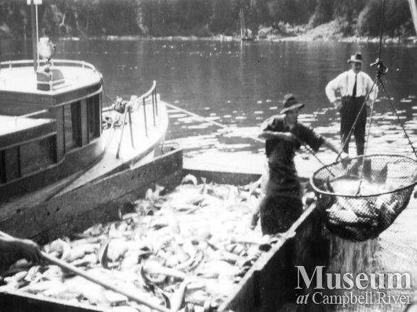 Unloading a catch of salmon at the Quathiaski Cannery, Quadra Island